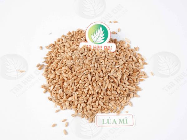 Lùa mì - Tân Hữu Quí