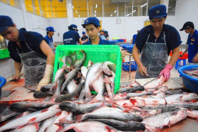 Xuất khẩu thủy sản giảm vì các nhà máy phải tạm ngưng hoạt động